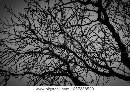 Silhouette Dead Tree On Dark Dramatic Grey Sky And Clouds Background For  Scary, Death, And Peace Co