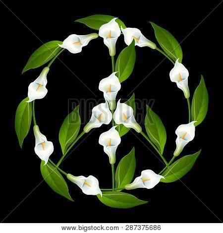 Friedenssymbol, Friedenszeichen, Calla-lilie, Zantedeschien, Zantedeschia, Arum-lilien, Cantedeskia,
