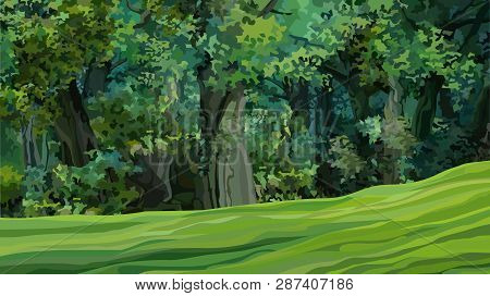 Cartoon Thick Green Deciduous Forest With Glade