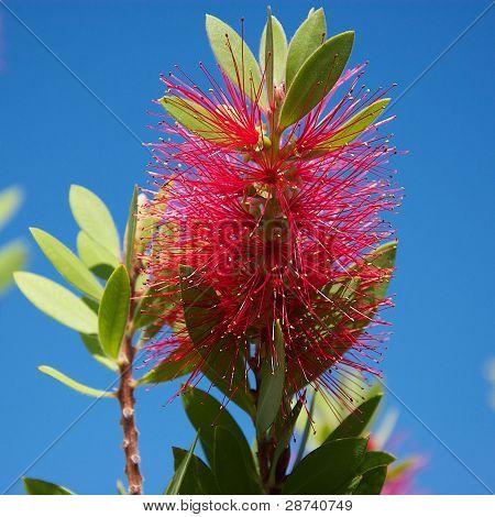 Exotic flower.