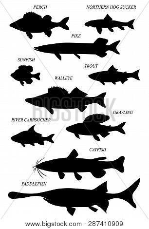Freshwater Fish Of North America With Common Names. Vector Drawn Silhouettes Image.