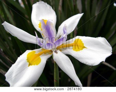 White Flower With Yellow And Purple Hilights