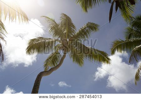 Tropical Palm Tree Panorama With Blue Sky, Vacation Concept