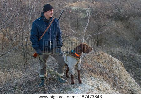A hunting dog of the deutsch kurzhaar breed at work. Zaporozhye region, Ukraine. February 2019 poster