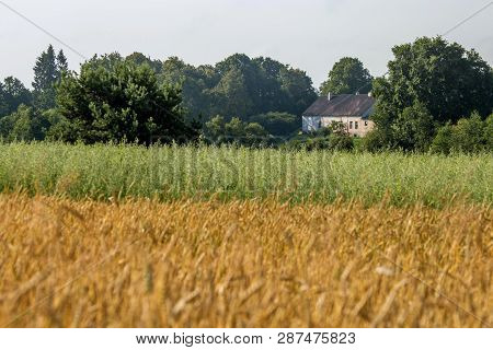 Country House Near Field Of Cereals Close To The River. Field With Cereal And House Between The Tree