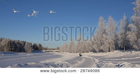 A sunny winter day with white snow and rime in the trees, over flown by four whoopees. Two unidentified people walk along a path. poster