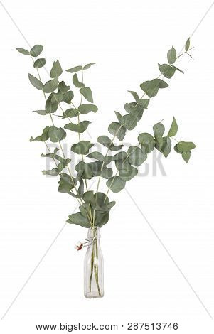 Bouquet Of Eucalyptus Cinerea, Silver Dollar, Twigs And Branches In Glass Swing Top Bottle, Isolated