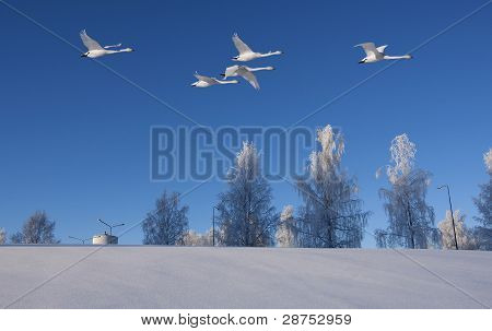 poster of A sunny winter day with newly fallen snow, over flown by five whoopees. Slope in the foreground and trees and a tower in the background.