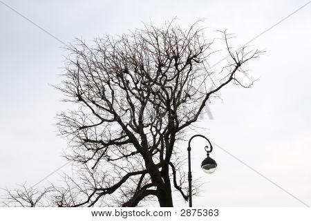 Street Lantern And Tree