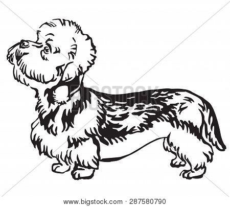 Decorative Outline Monochrome Portrait Of Standing In Profile Dandie Dinmont Terrier Dog, Vector Iso