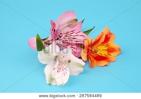 Soft Focus Flower Background With Copy Space. Made With Lens-baby And Macro-lens.