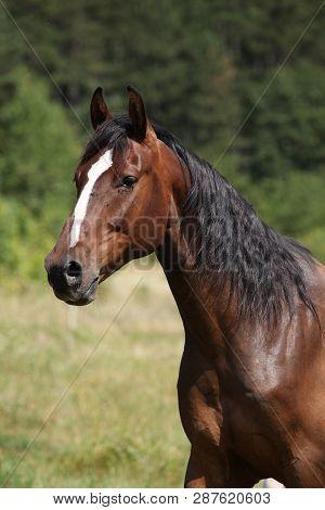 Amazing Horse With Nice Mane On Pasturage