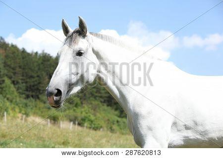 Amazing Horse With Short Mane On Pasturage