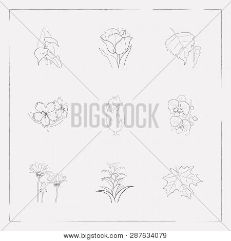 Set Of Nature Icons Line Style Symbols With Guzmania, Dianthus, Arum Lily And Other Icons For Your W