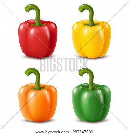 Colorful Paprika Peppers Isolated On White. Vector Illustration