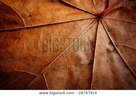 Faded Leaf Veins