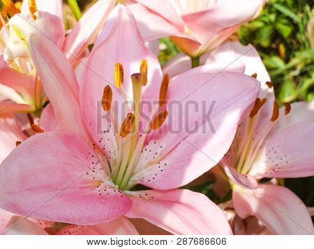 Flowers Plants, Beautiful Flowering Plants. Flowers Plants, Beautiful Flowering Plants