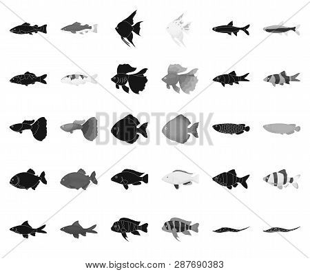 Different Types Of Fish Black, Monochrome Icons In Set Collection For Design. Marine And Aquarium Fi