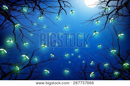 Firefly In The Jungle With Full Moon Background In The Night