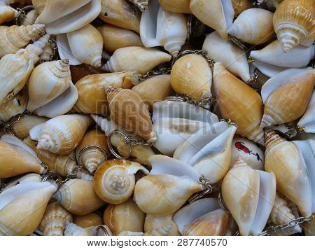 Key Chains Made Of Clam Shells. Key Chains Made Of Clam Shells