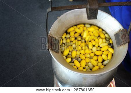 Making Silk With Silkworm Cocoons By Handmade.boiling Yellow Silkworm Cocoons To Make Silk Thread.