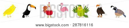 Bird Set Line. Canary, Toucan, Cock Rooster, Parrot, Flamingo, Eagle, Quail. Cute Cartoon Characters