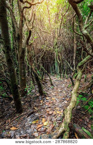 Cloud forest in Poas Volcano National Park in Costa Rica