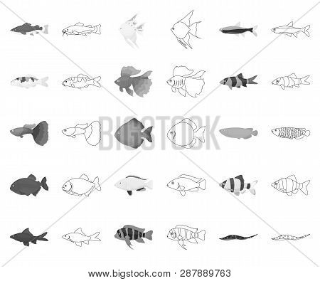 Different Types Of Fish Monochrome, Outline Icons In Set Collection For Design. Marine And Aquarium