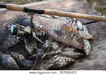 Trophy Fishing. Freshwater Bream Fish And Silver Bream In Landing Net With Fishery Catch In It And F