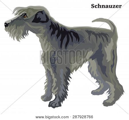 Decorative Outline Portrait Of Standing In Profile Dog  Schnauzer, Vector Colorful Illustration Isol
