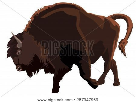 Bison. European Wisent. The Largest Terrestrial Animals In Europe. Vector Illustration
