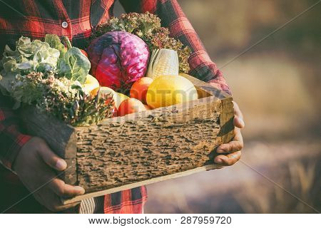Fresh Organic Vegetables.