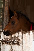 Colt baby horse head. This is farm horse. poster