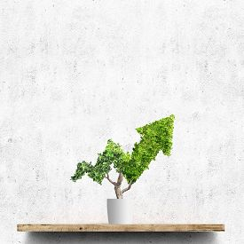 Illustration Of Potted Green Plant Grows Up In Arrow Shape Over Concrete Wall Background. Concept Bu