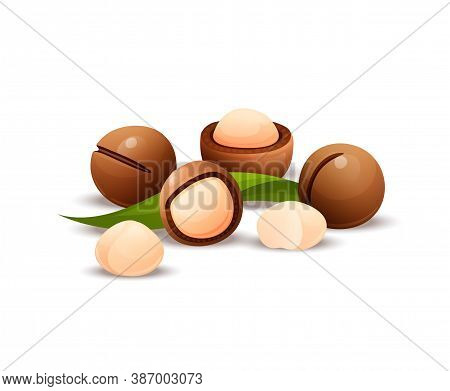 Macadamia Nut Composition, Raw And Hulled Kernels
