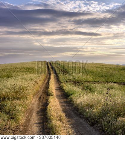straight and long rural path crosses grass land of the Sicily agriculture at the sunset