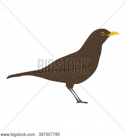 Turdus Merula - Common Blackbird - Female - Side View - Flat Vector Isolated