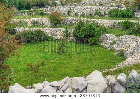 Sheep pasture drystone walls Rudine Krk island Croatia