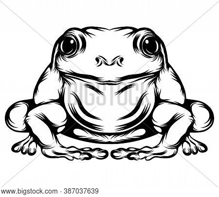 The Frog With His Full Body Of Illustration