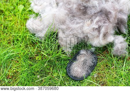 Concept Annual Molt, Coat Shedding, Moulting Dogs.