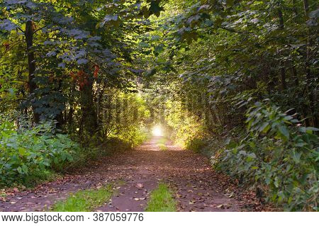 Autumn Forest Tunnel Of Love.  Autumnal Tunnel Of Trees And Bushes.