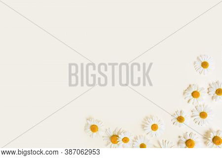 Flower Frame / Border Of Chamomiles On A Ivory Background. Flowers Composition. Top View, Copy Space