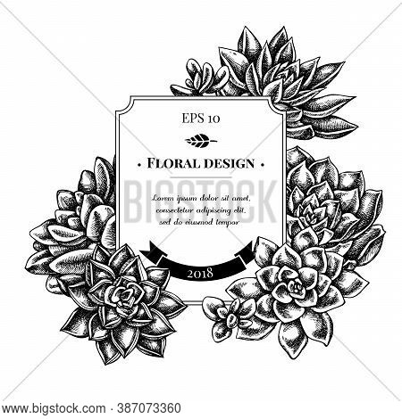 Badge Design With Black And White Succulent Echeveria, Succulent Echeveria, Succulent Stock Illustra