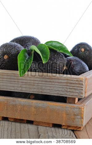 Closeup of a wood crate full of ripe Hass Avocados, Vertical format with a white background.