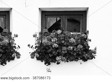 Typical Window In Bavaria Without Shutters, Decorated With Fresh Flowers In Black And White