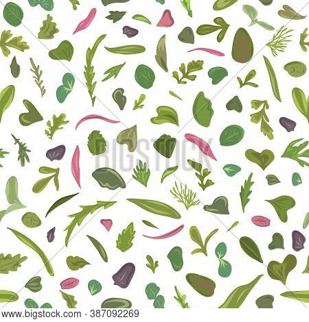 Seamless Pattern. Hand Drawn Rainbow Chard Micro Greens. Microgreen Chard, Radish, Beet, Carrot, Cab