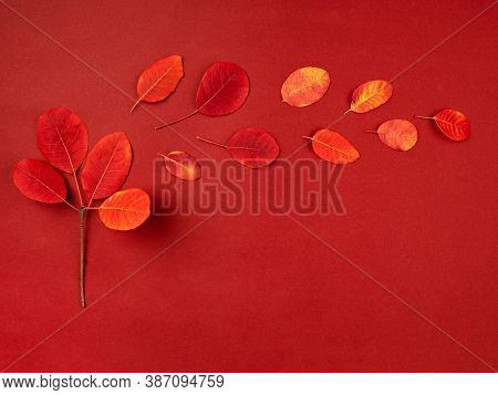 Minimalist Composition Of Red Fallen Leaves Forming Symbolic Autumn Tree And Windy Weather. Autumn F