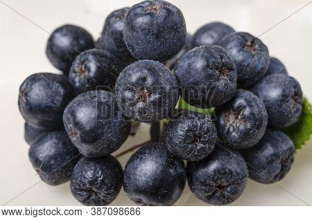 Brush Bunch Of Black Astringent Autumn Chokeberry Berries