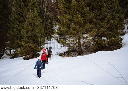 Tourists Go Hiking In Winter With A Backpack, Winter Trekking, Hiking In The Snow, A Group Of Touris