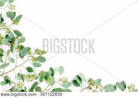 Frame Borders Made Of Eucalyptus Populus Leaves With Fruits In The Form Of Berries On White Backgrou